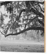 Foggy Morning On Coosaw Plantation Wood Print