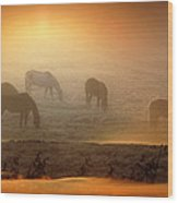 Foggy Morning Pasture Time Wood Print