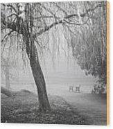 Foggy Willow Wood Print