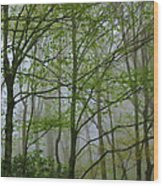 Foggy Woods Wood Print
