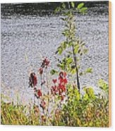 Foliage Along Iowa River Iowa City Ia Wood Print