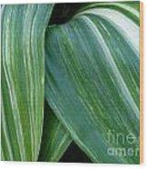 Foliage Folds Wood Print