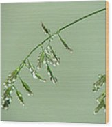 Foliage On Mount Pilatus Wood Print