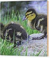 Follow The Leader Ducky Style Wood Print