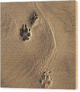 Following My Dog  Wood Print