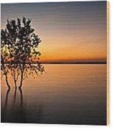 Folsom Lake Tree Wood Print
