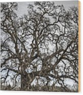 Folsom Old Oak  Wood Print