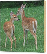 Fond Fawns Wood Print by Charles Warren