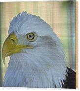 Fontana Eagle Portrait 4 Wood Print