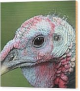 Fontana Turkey Portrait Wood Print