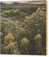 Foothills Sage Wood Print by Michael Van Beber