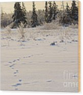 Footprints In Fresh Snow Wood Print