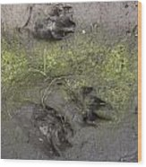 Footprints Of A Large Dog In The Mud Netherlands Wood Print