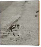 Footprints On The Beach Wood Print