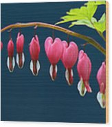 Bleeding Hearts For Your Love Wood Print