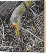 foraging for wild edibles Sandhill Crane Wood Print