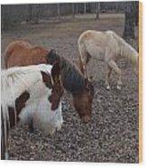 Foraging Horses Wood Print