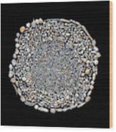 Foraminifera From Challenger Expedition Wood Print