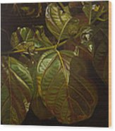 Forbidden Fruits Wood Print