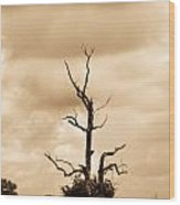 Foreboding Clouds Over Ghost Tree 1 Wood Print