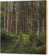 Forest Alder Path Wood Print by Mike Reid