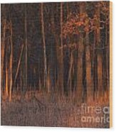 Forest At Sunset Wood Print