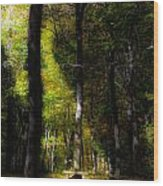Forest Bench Wood Print