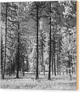 Forest Black And White Wood Print