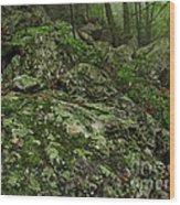 Forest Boulder Field Wood Print