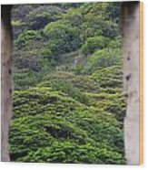 Forest Canopy Through The Window Of The Ruins Wood Print