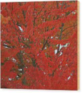 Forest Colors Of Fall Wood Print