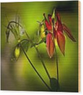 Forest Columbine  Wood Print