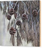 forest decoration - A pine tree give us a natural autumn decoration  Wood Print