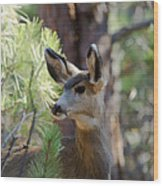 Forest Doe Wood Print