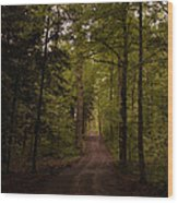 Forest Entry Wood Print
