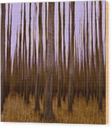 Forest Escape Wood Print by Dan Mihai