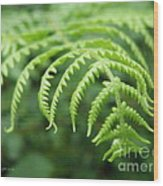 Forest Fern Wood Print