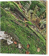 Forest Floor Fungi And Moss Wood Print