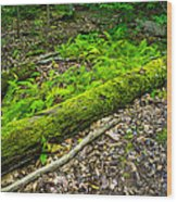 Forest Floor Gosnell Big Woods Wood Print