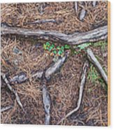 Forest Floor With Tree Roots Wood Print
