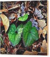 Forest Flora Wood Print