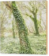 Forest Glow - The Magical Trees Of The Los Osos Oak Reserve Wood Print
