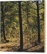 Forest Hike Wood Print