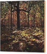 Forest Illuminated Wood Print