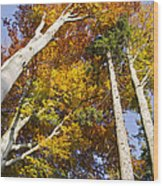 Forest In Autumn Bavaria Wood Print