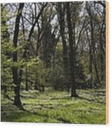 Forest In Spring Wood Print