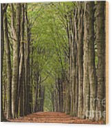 Forest In The Fall Wood Print