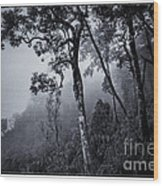 Forest In The Fog Wood Print