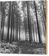 Forest In The Mist Wood Print