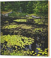 Forest Lake With Lily Pads Wood Print